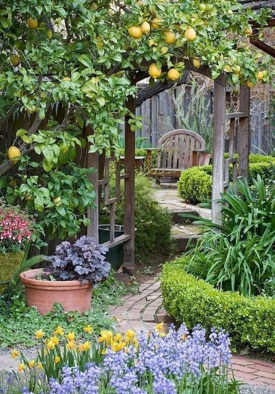 beautiful garden with fruit