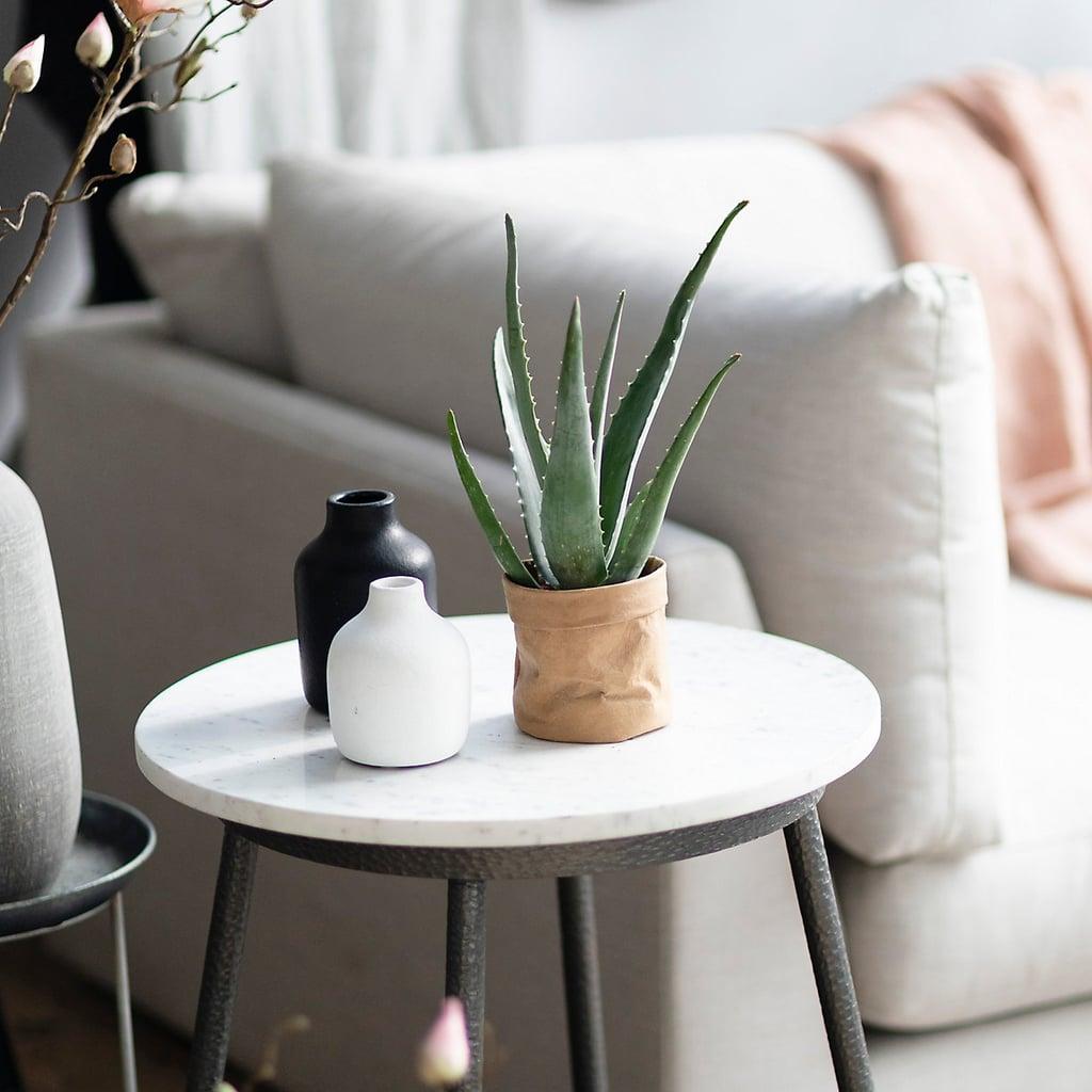 Aloe Coffee Table