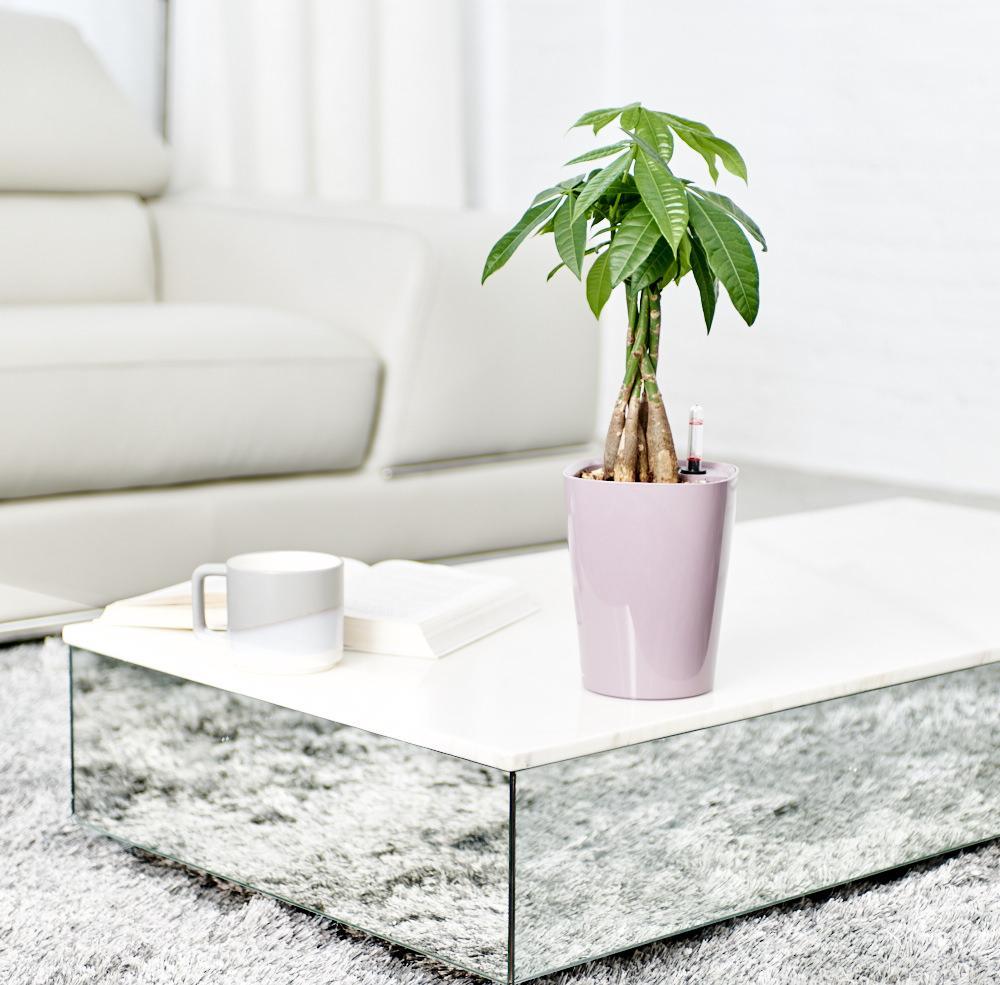 Money Tree on coffee table