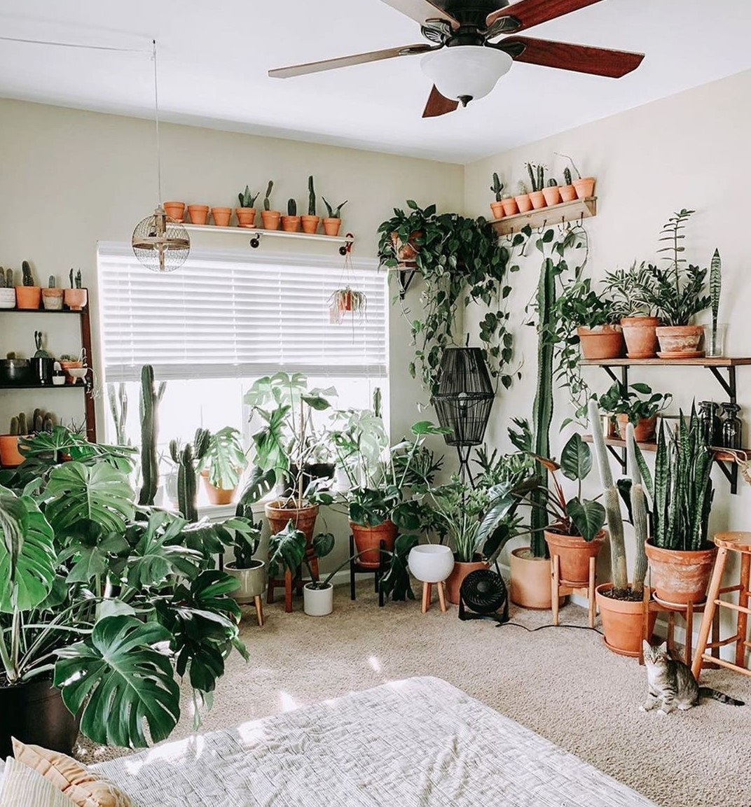 Special Room for Ornamental Plants