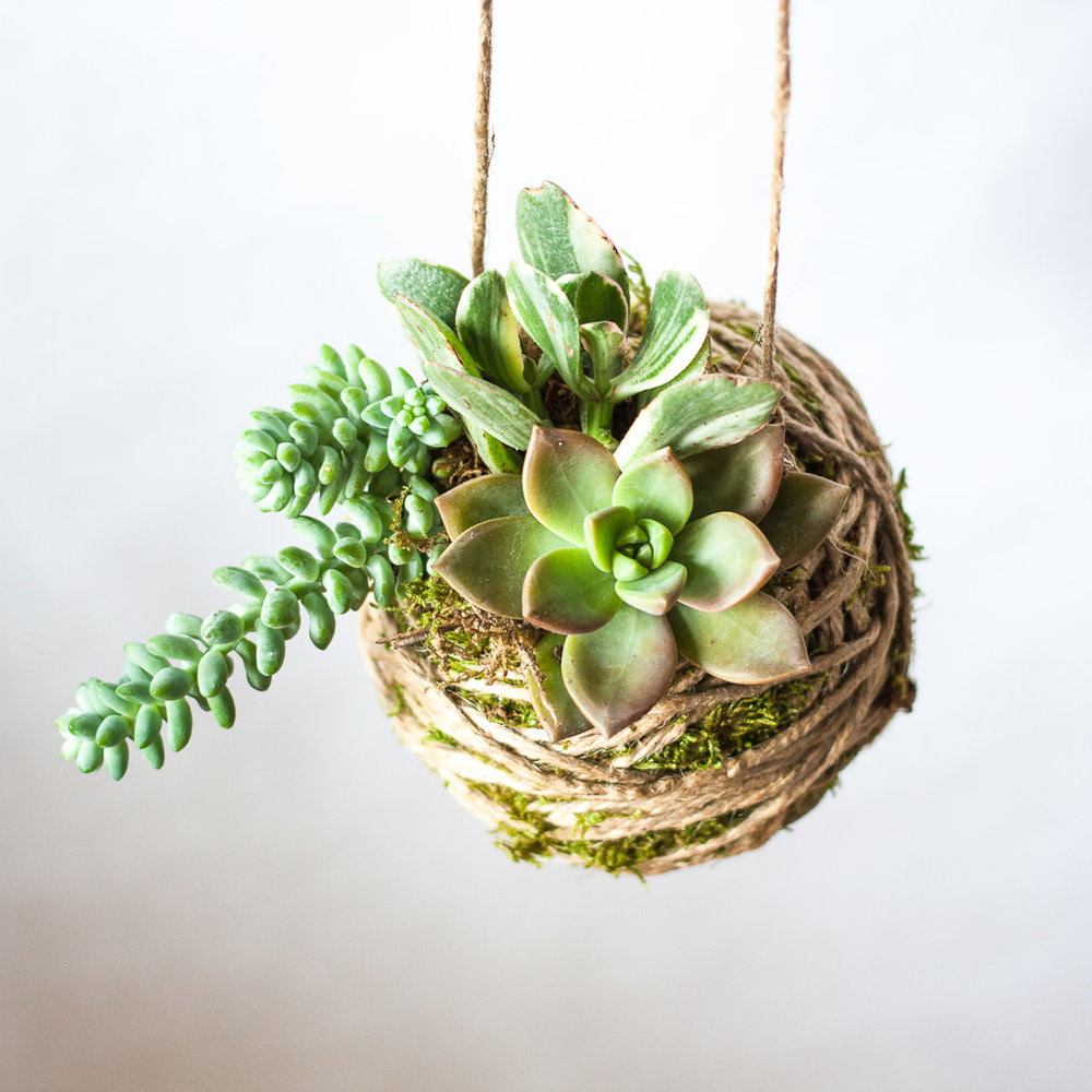 Beautiful Succulent Hanging Gardens