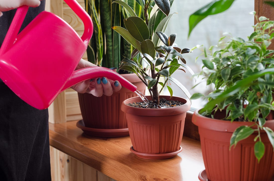 Don't Water Your Ornamental Plants Too Often