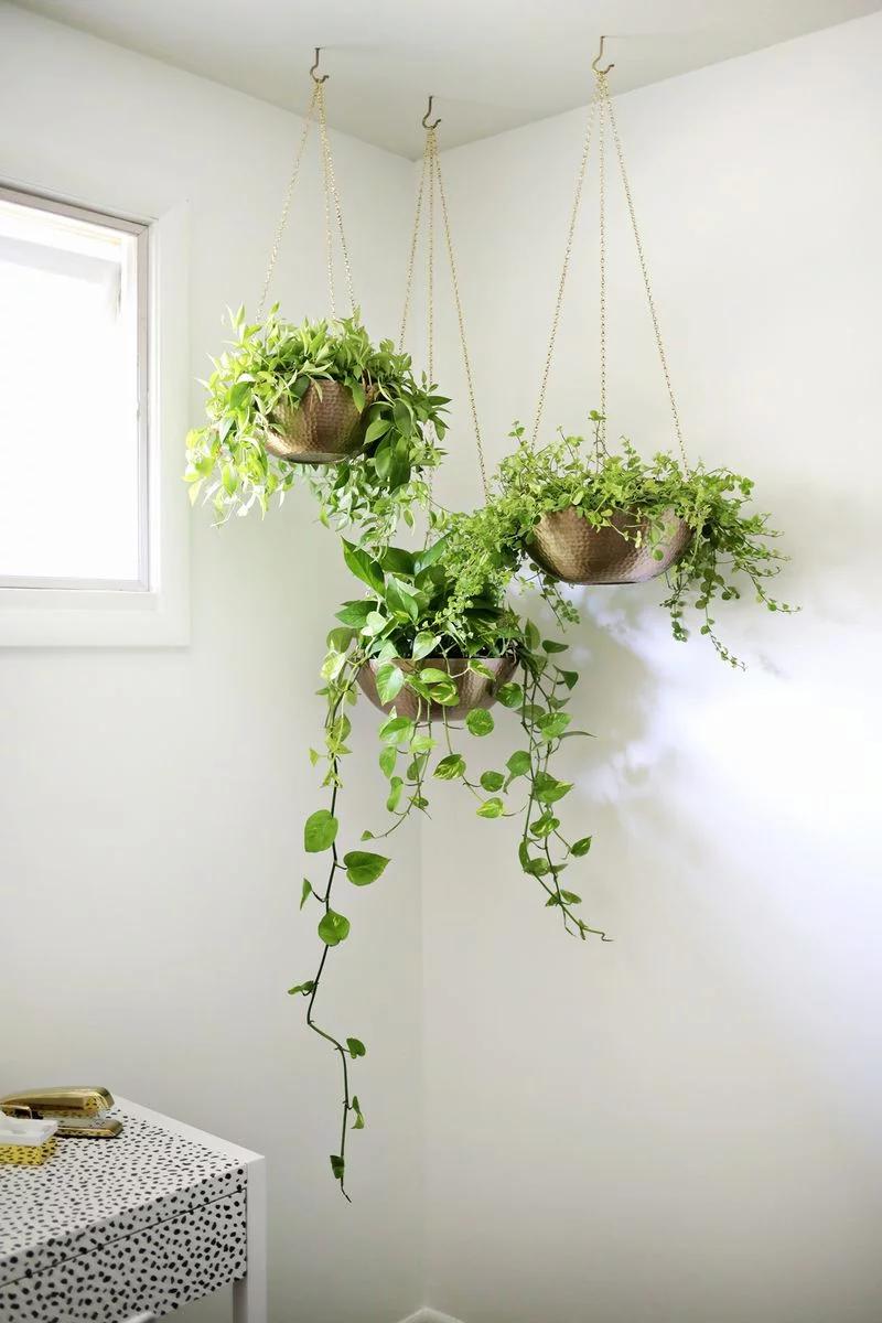 Hanging Garden in the Corner of the Room