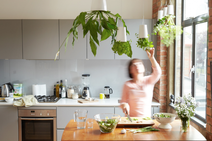 Hanging Gardens in the Kitchen