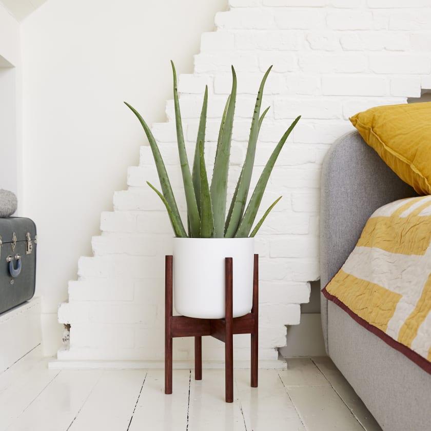 Aloe Vera - Purify Your Home