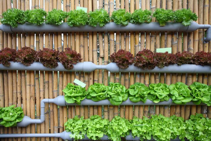 Create a Good Irrigation System