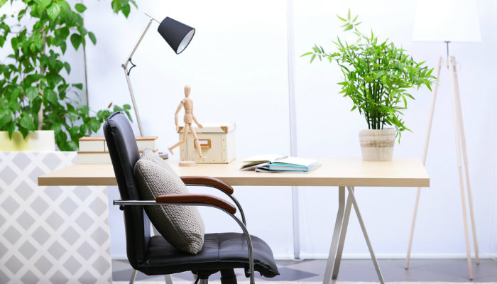 Small Ornamental Plant Ideas to Beautify Your Workspace