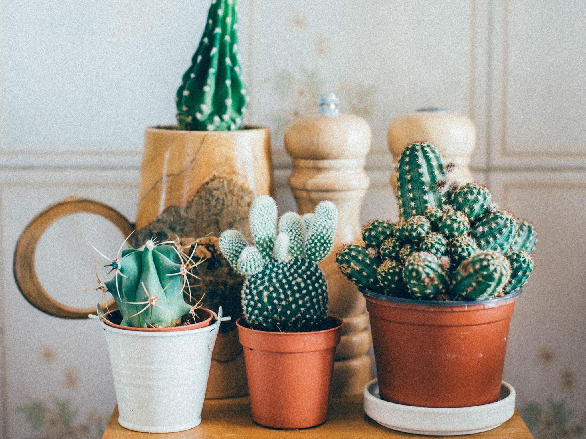 Observe Your Cactus