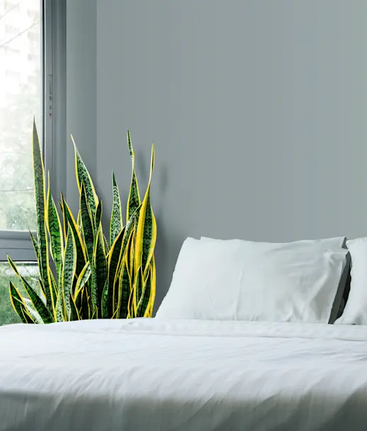 Have Fresh Air in Your Bedroom