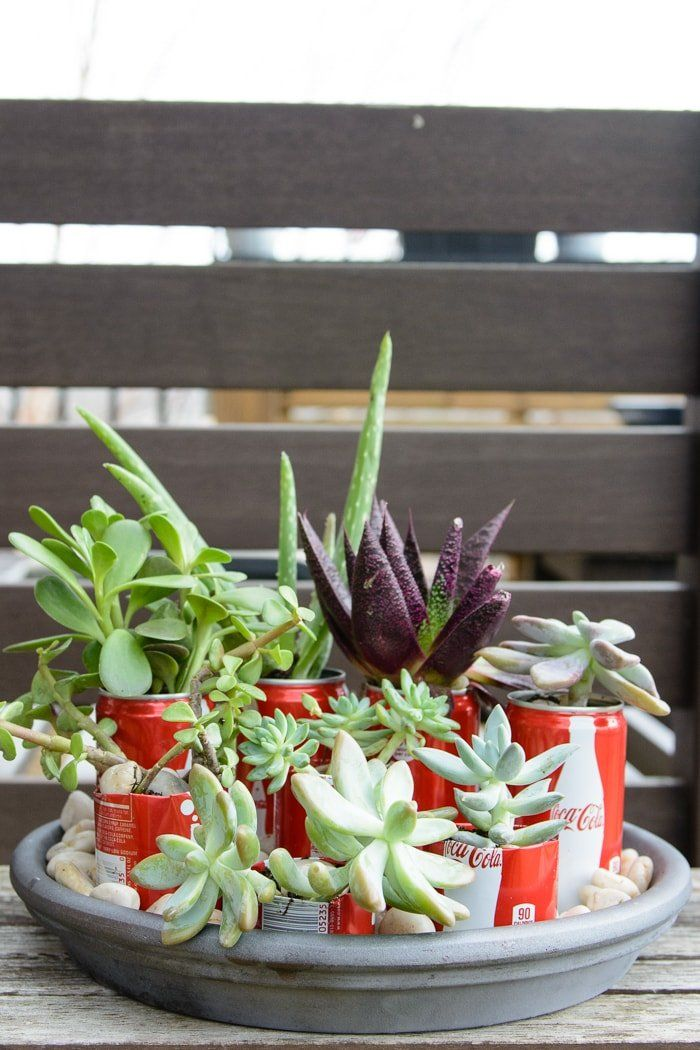 Aesthetic Coke Cans Planter