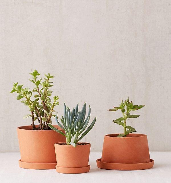 Measure Your Succulent