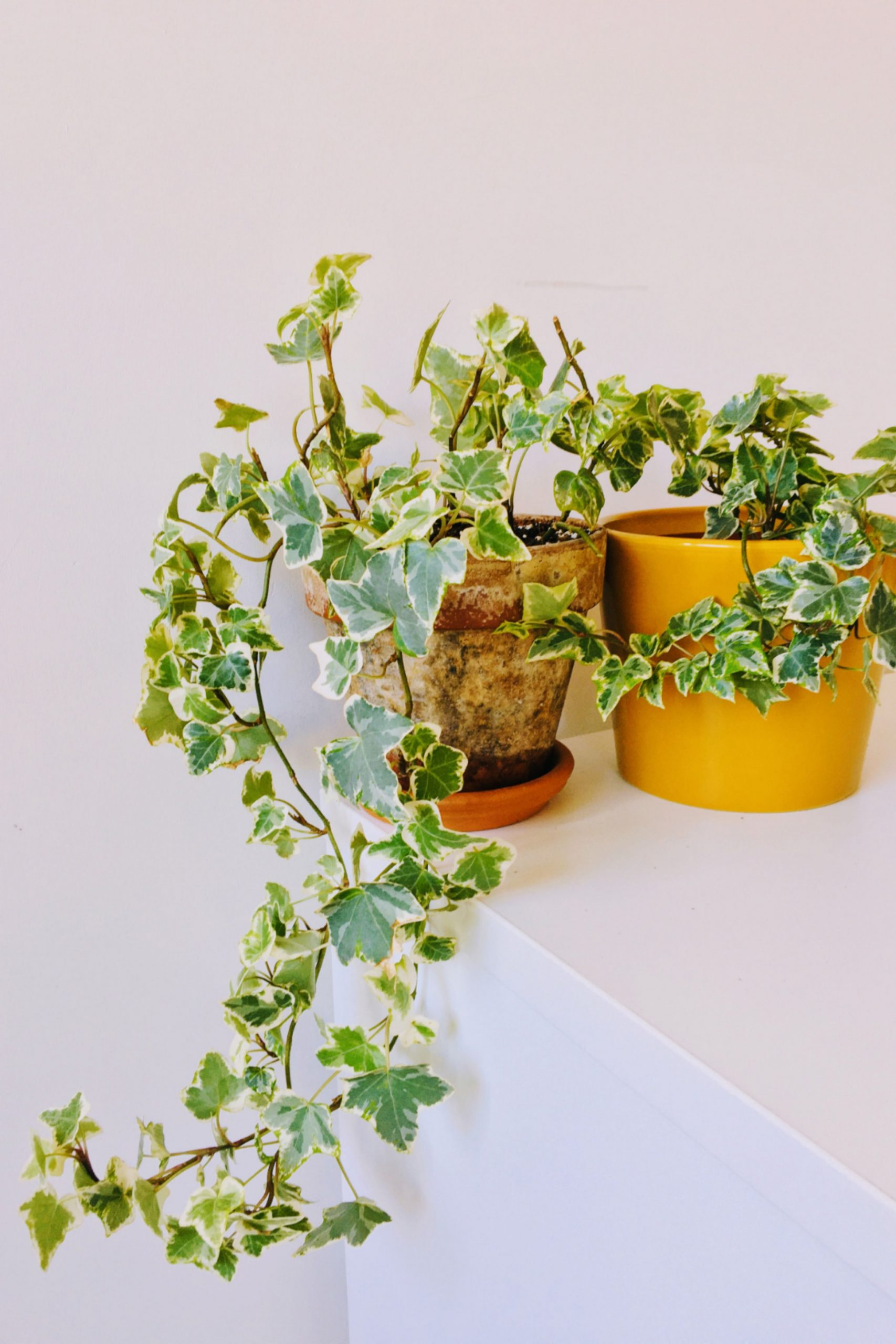 Use a Small to a Medium Pot
