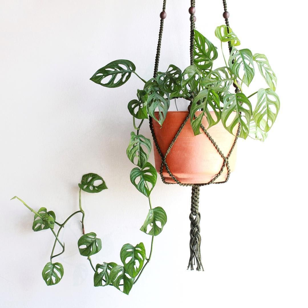 Hanging Plant on The Knotting Rope