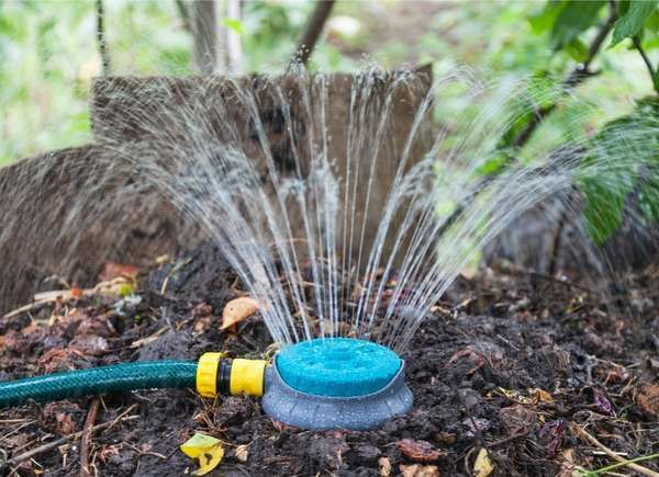 Regular watering