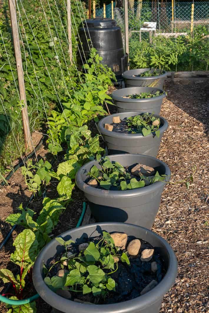 Start to plant