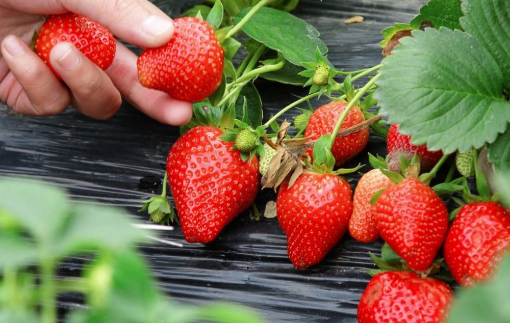 Take The Strawberry Seeds