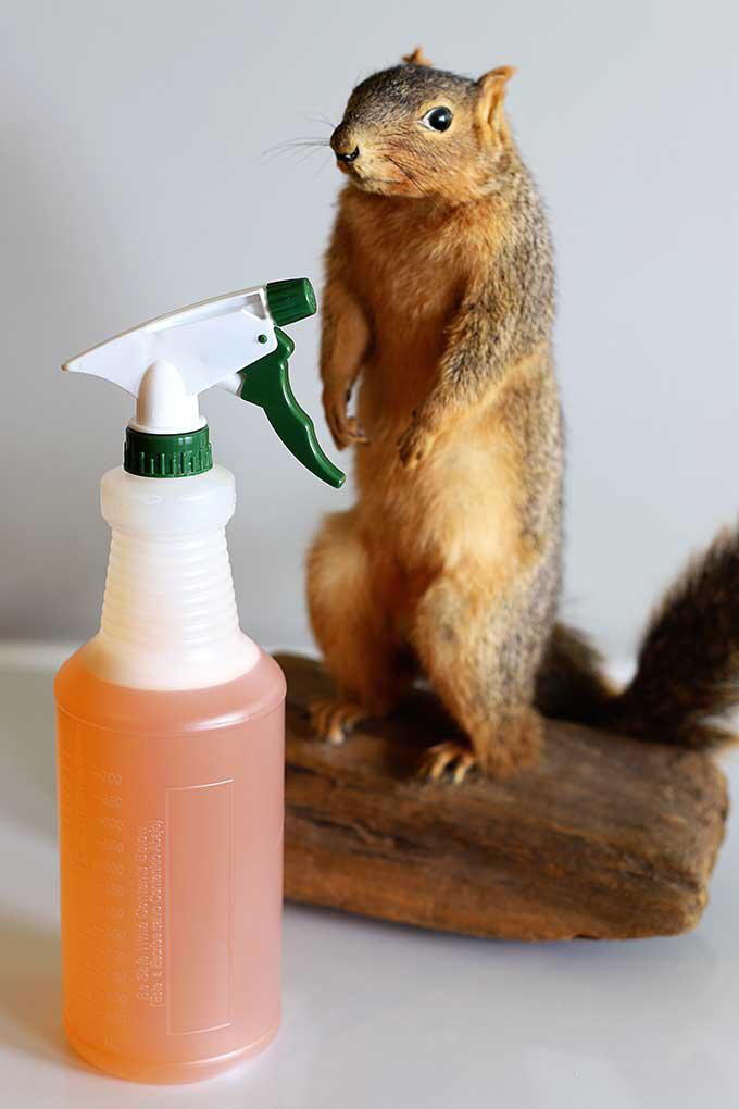 Spray All Rats Shelter