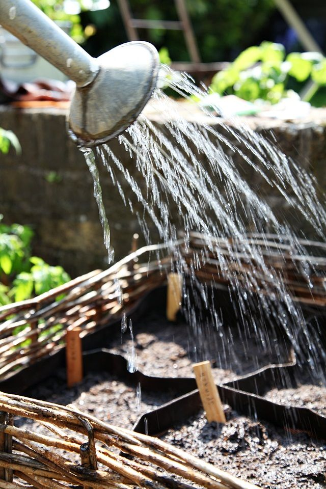Watering Routine