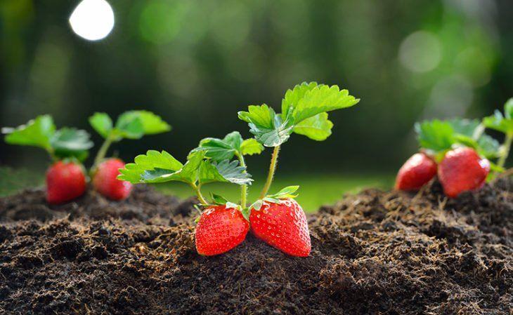 Start Planting The Germ