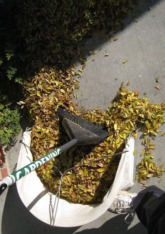 Shred the Leaves