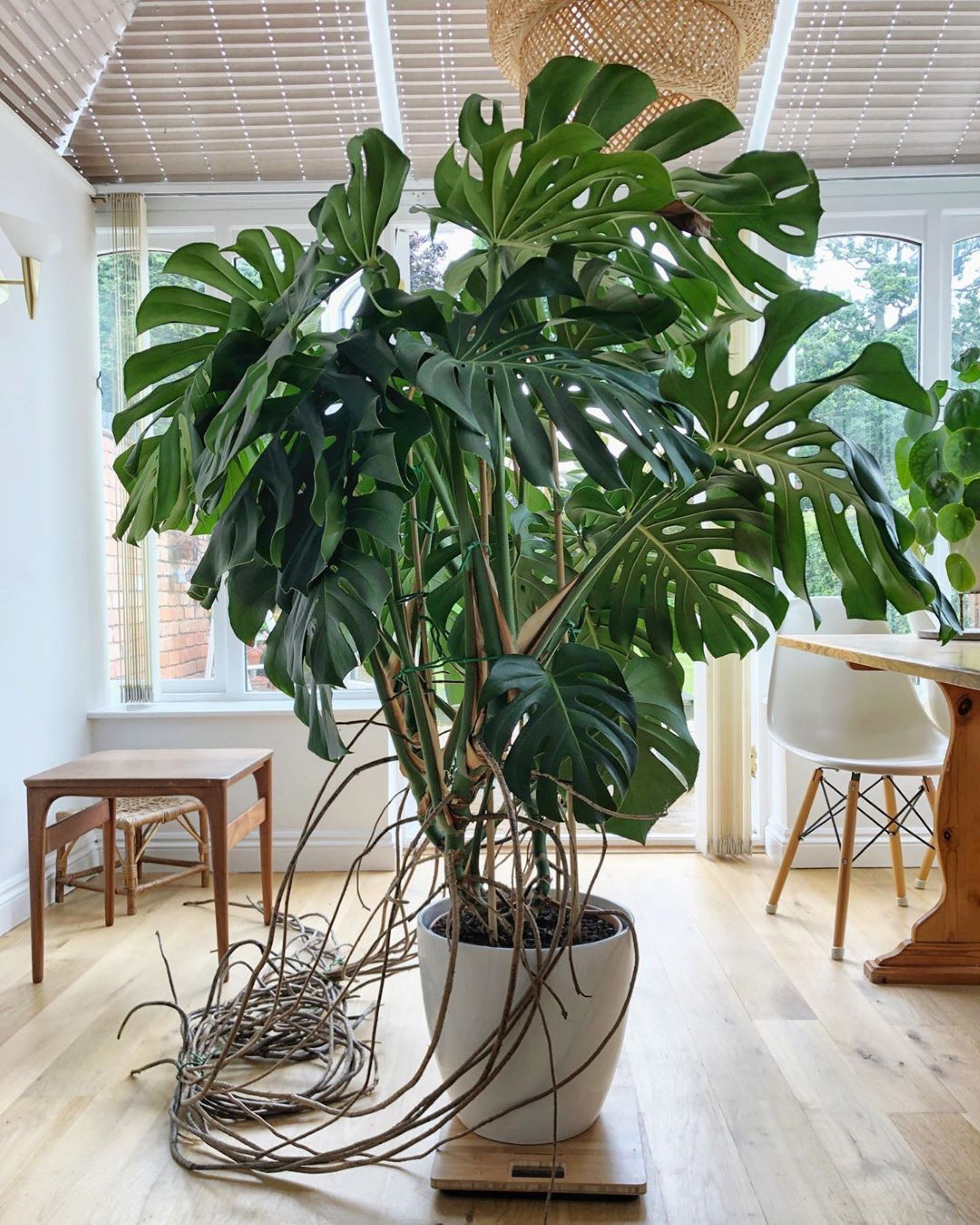 When to Repot The Plant