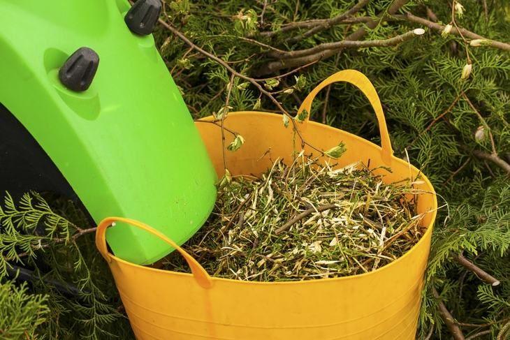 Pruning Leaf and Leaf Shredder