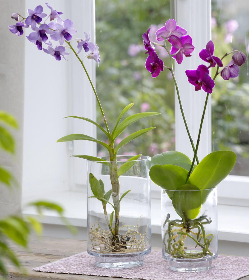 Set a Good Site for Orchid