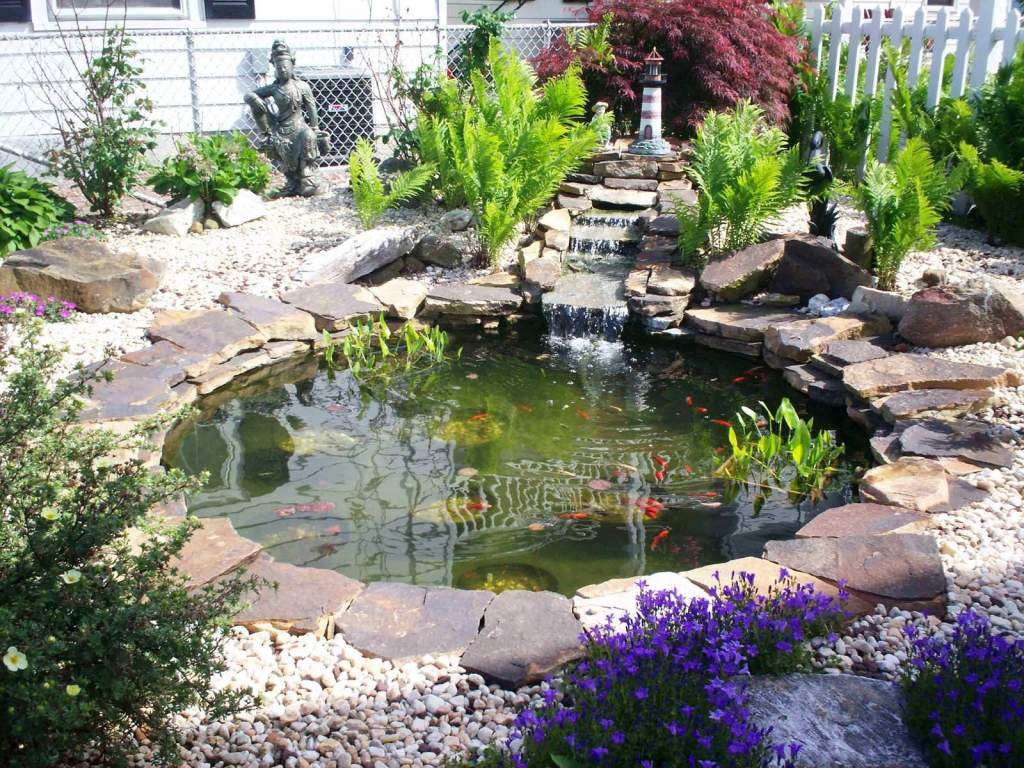 Fish Pond in the Middle of the Backyard
