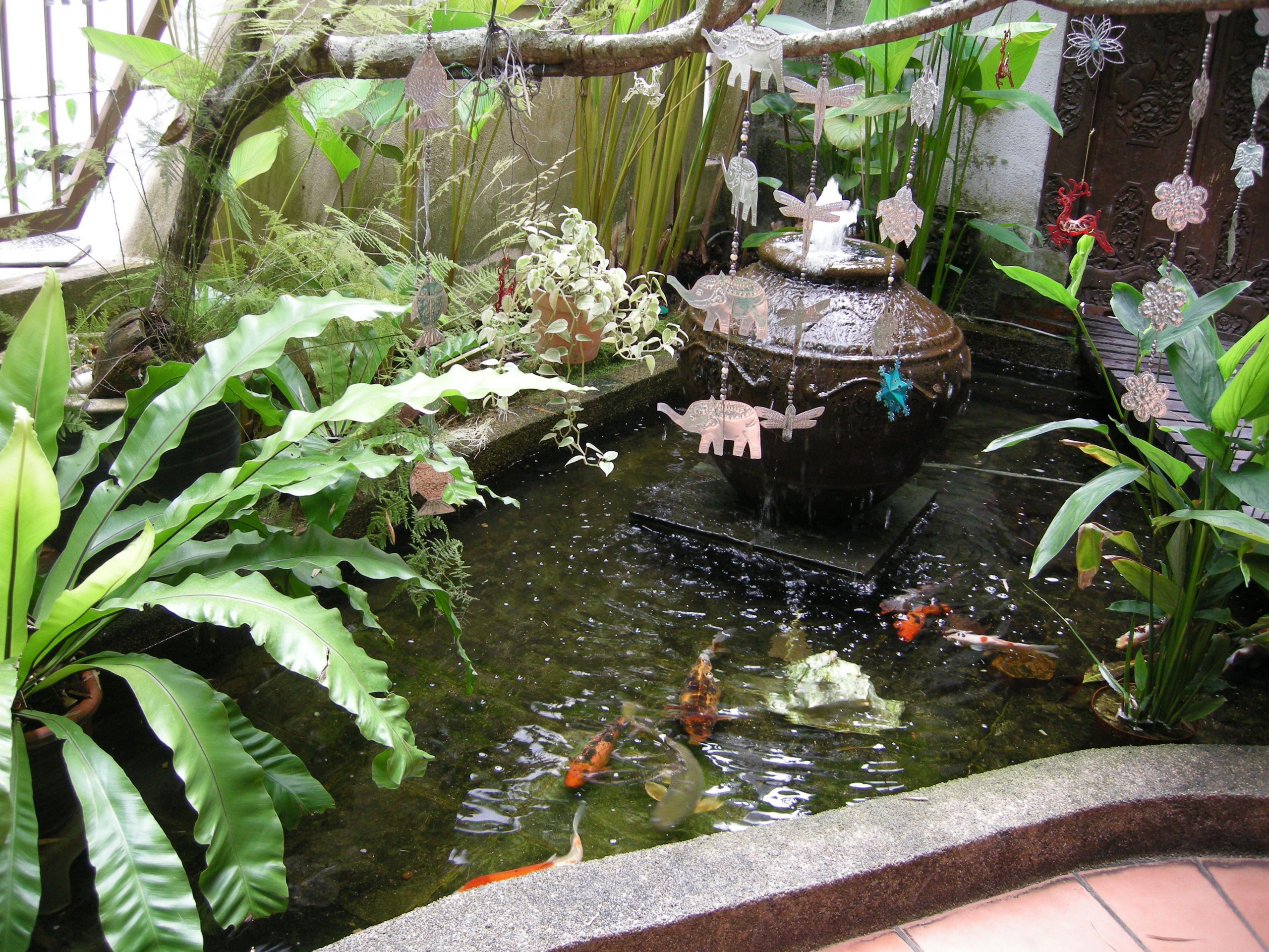 Fish Pond with Tropical Accent