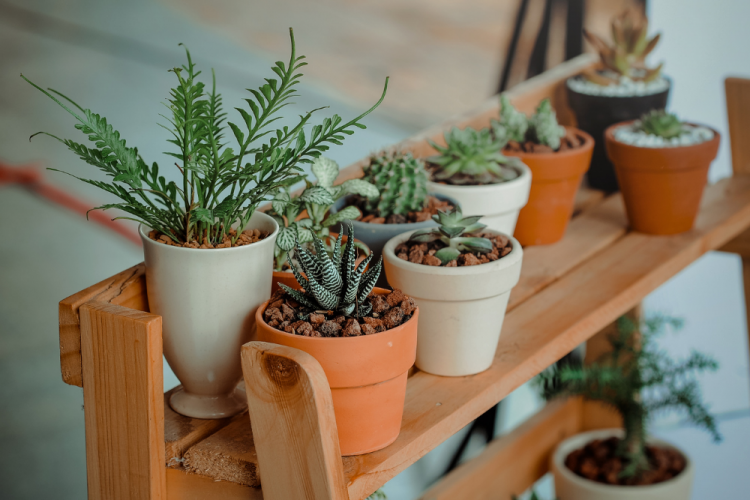 Indoor Ornamental Plant Care During The Summer Season