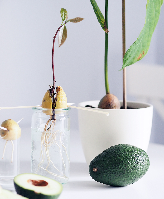 Remove the Seed from Avocado