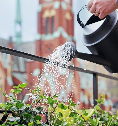 Watering Needs