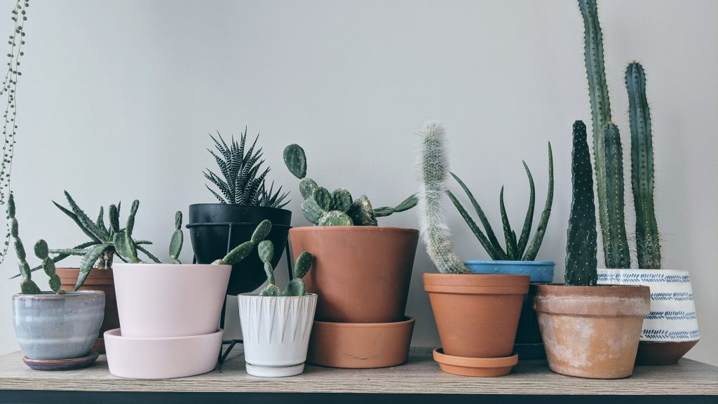 Use Ideal Material for Cactus Pots